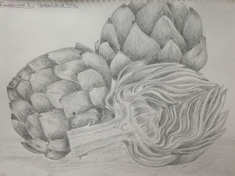 Artichoke-Drawing-pencil