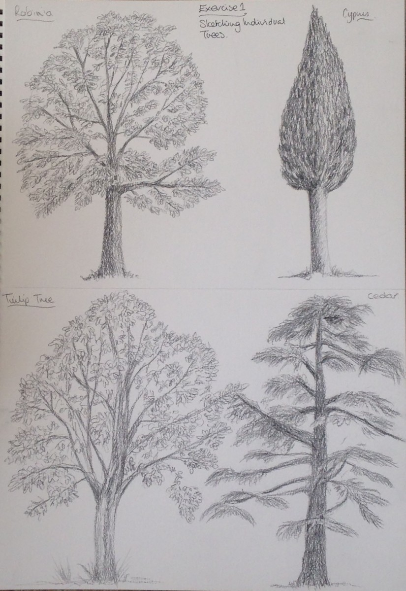 Expanse - Project 1 Trees - exercise 1 Sketching individual trees