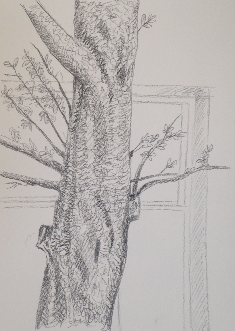 Expanse - Project 1 Trees - exercise 2 Larger observational of individual tree