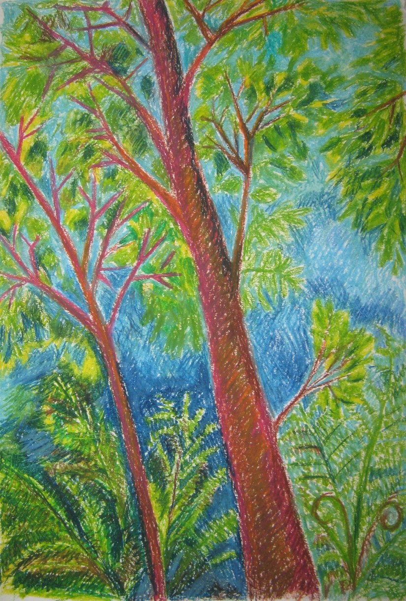 Study of several trees - oil pastel