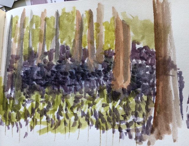 Bluebell wood sketch