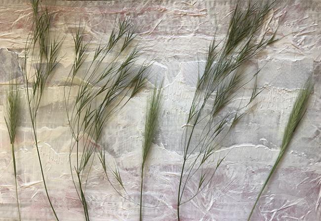 Grasses b
