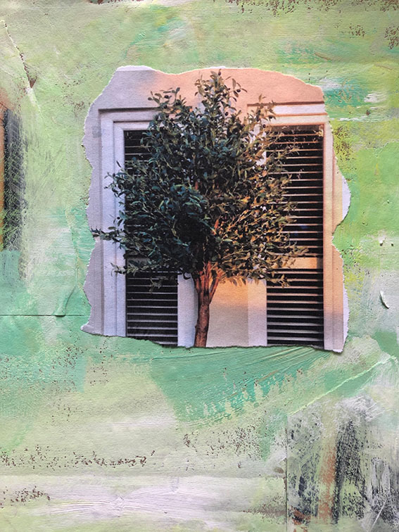 Olive tree and shutter d
