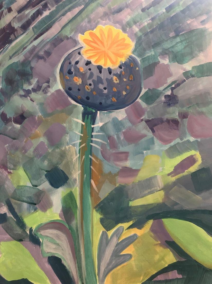 Abstract poppy pod study