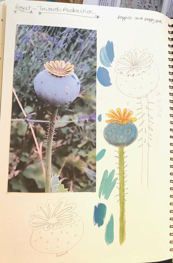 Poppy pod sketchbook
